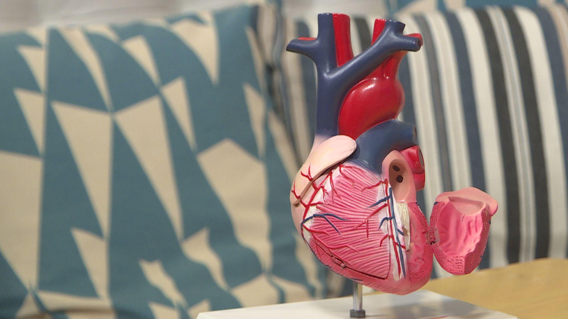 【杏林在線—健康1分鐘+】為甚麼心臟不會患癌?