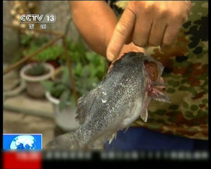渤海漏油或令大量海產死亡