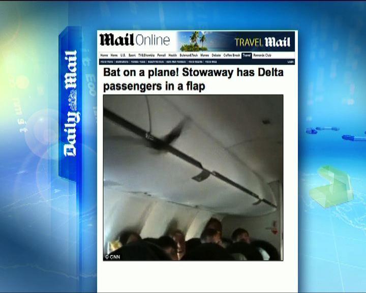 環球薈報:客機驚現蝙蝠嚇壞乘客