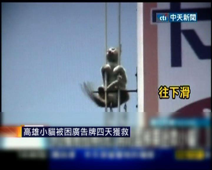 高雄小貓被困廣告牌四天獲救