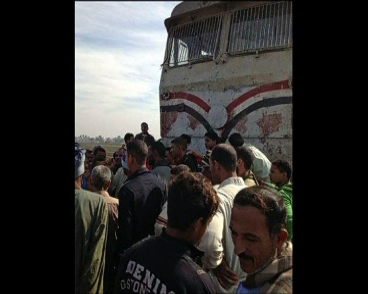 埃及火車與校巴相撞近50人死