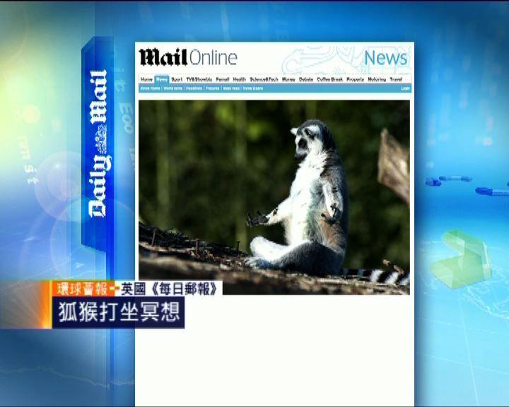 環球薈報:狐猴打坐冥想
