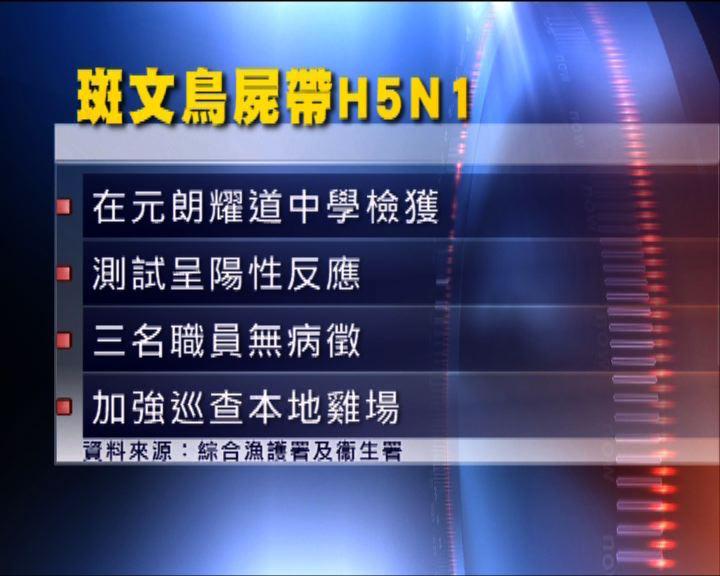 元朗斑文鳥屍體帶H5N1禽流感病毒
