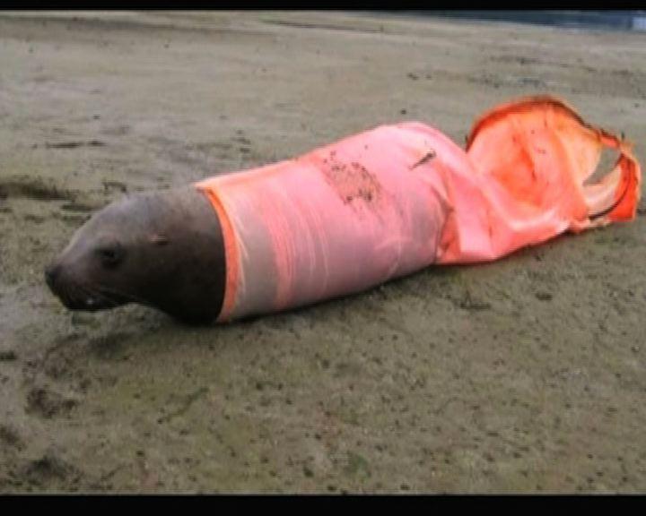 海洋垃圾為生物帶來不幸