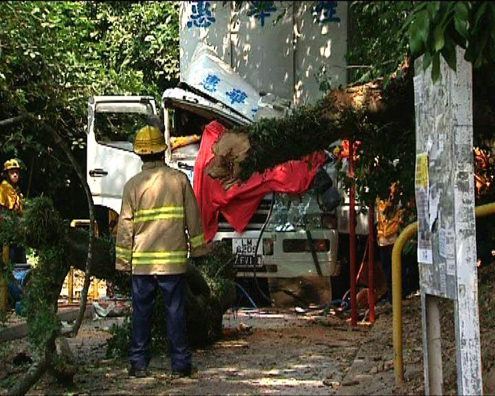 大樹腐爛倒塌壓中路經貨車