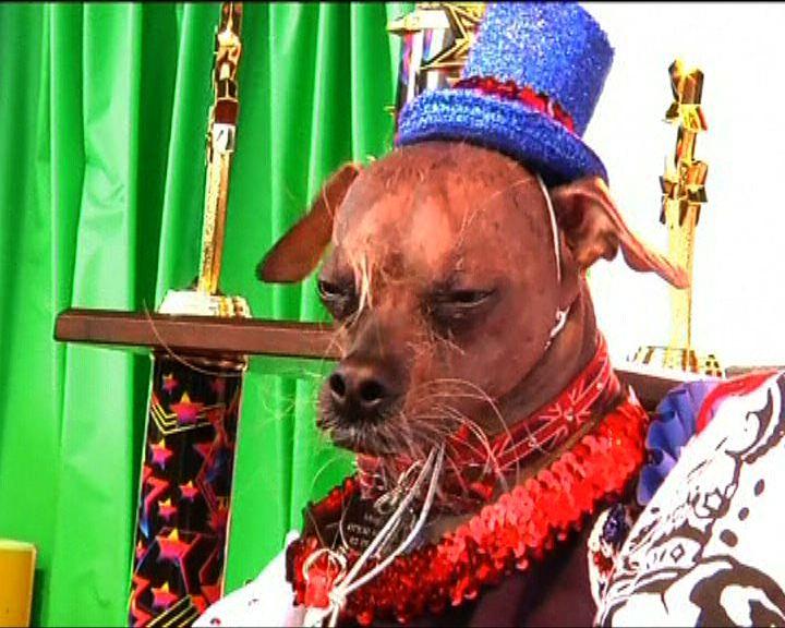 世界最醜狗比賽中國冠毛犬勝出