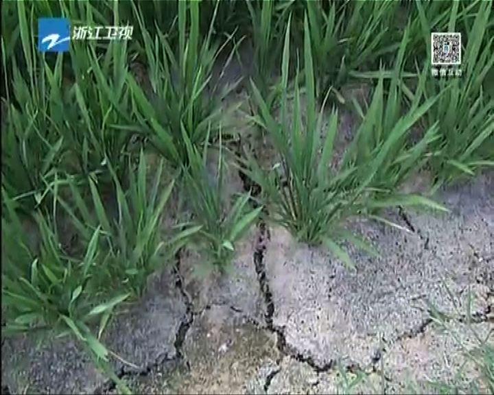 新火爐杭州持續超過40度