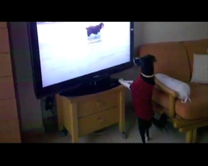 首個狗隻專門電視頻道正式播放