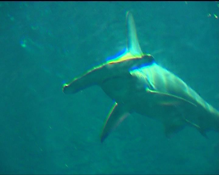 專家指鯊魚死亡或因神經受損