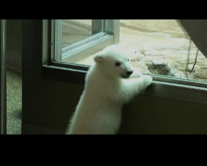 小北極熊為水牛城動物園籌款