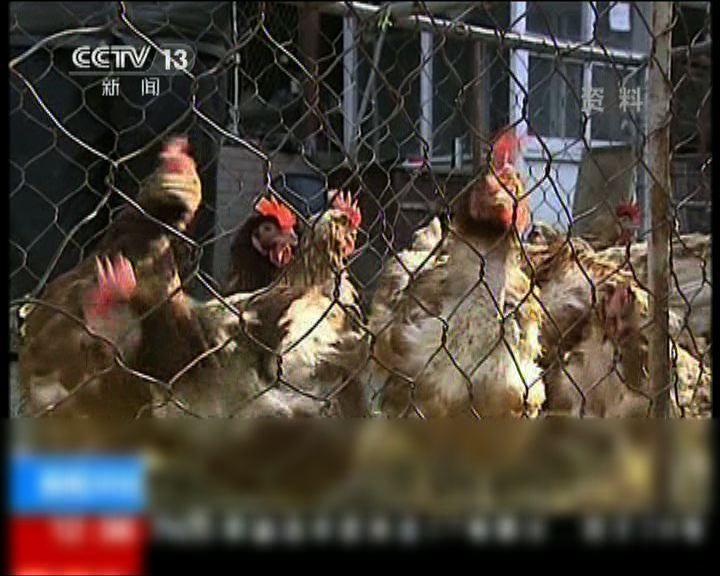 內地H7N9病例持續增加