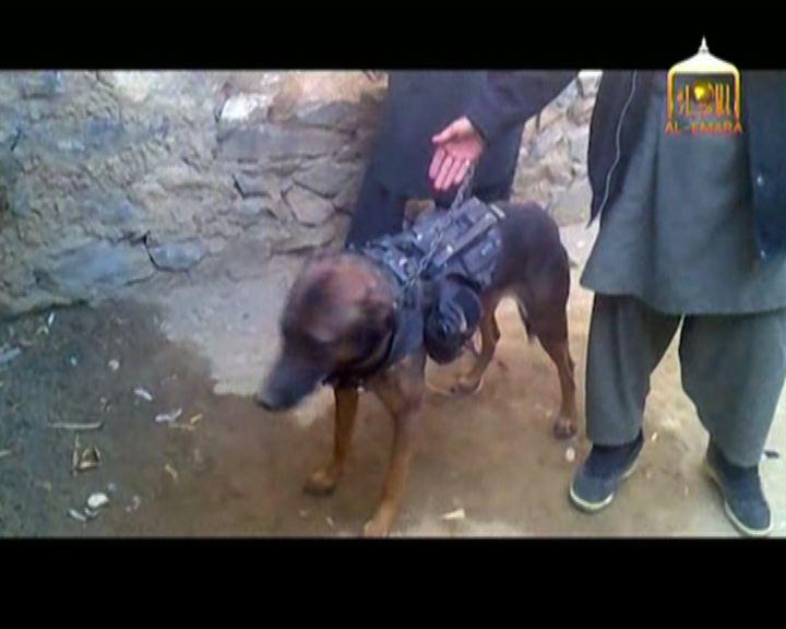 【環球薈報】阿國塔利班疑捕獲美軍軍犬