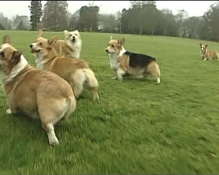 【環球薈報】狗隻或可理解情緒