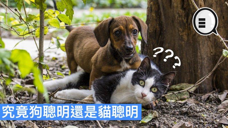 〈好Life〉【貓狗對決】邊個聰明啲?