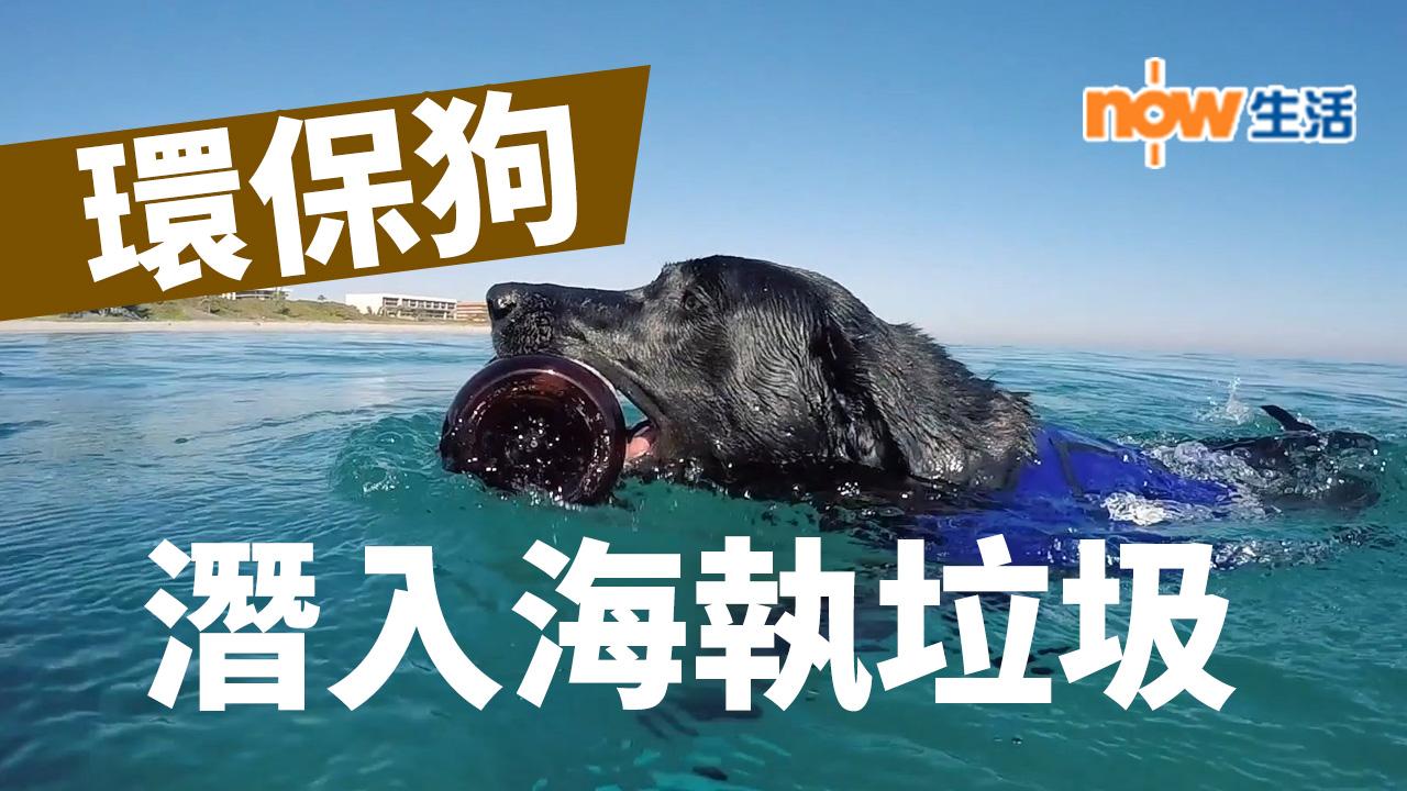 【好勁】「環保狗」潛入海執垃圾