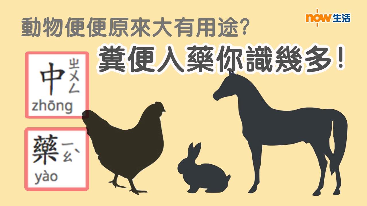 〈好Life〉動物便便原來大有用途?糞便入藥你識幾多!