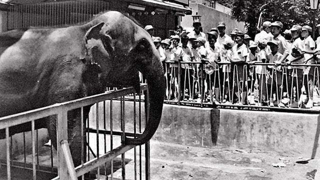 香港荔園的大象天奴
