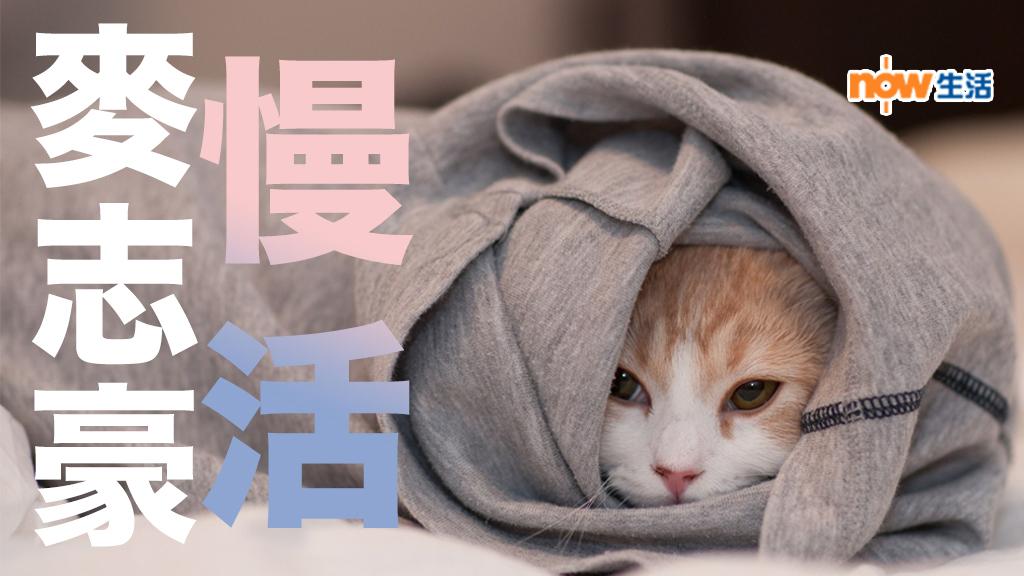 〈人面獸心〉慢活的貓兒-麥志豪