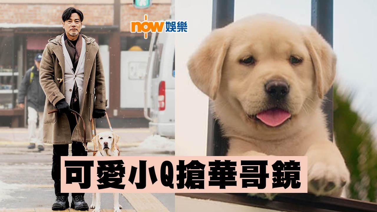 可愛小Q搶晒鏡 任達華:最想多啲人識導盲犬