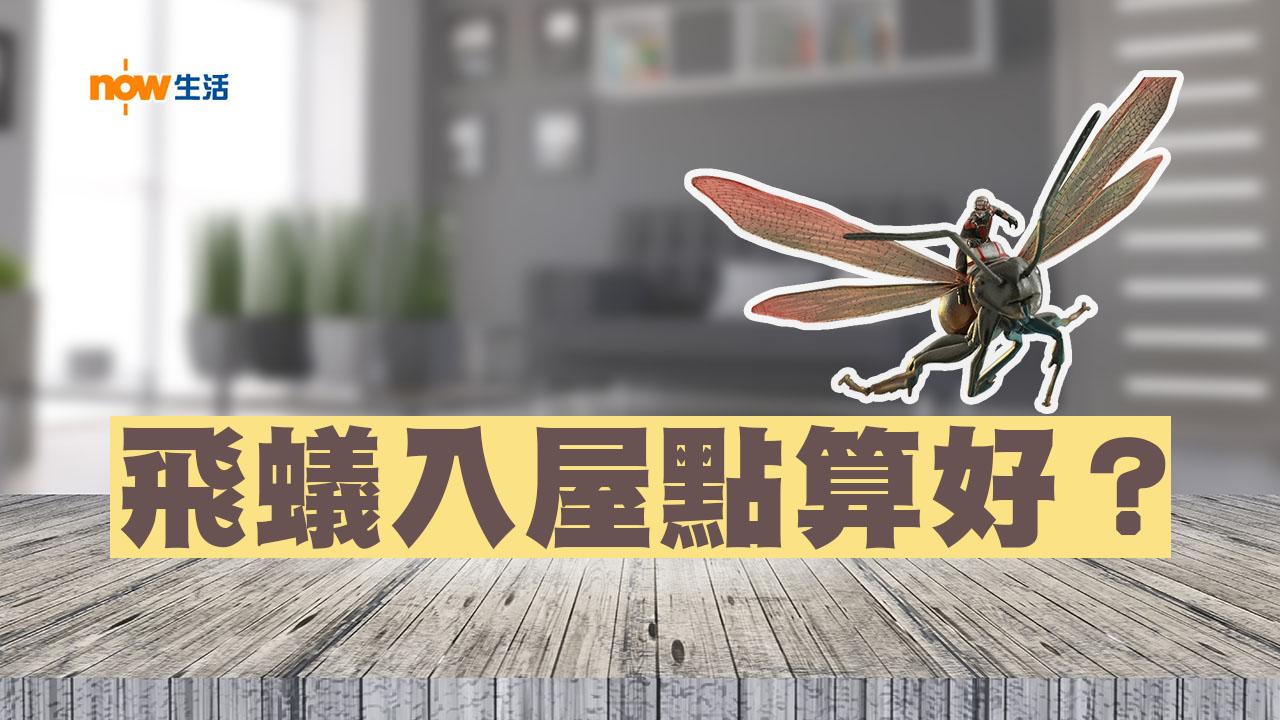 【生活小知識】飛蟻入屋有辦法!