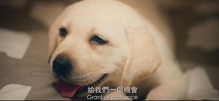 ✨Now.com請你睇港版導盲犬《小Q》
