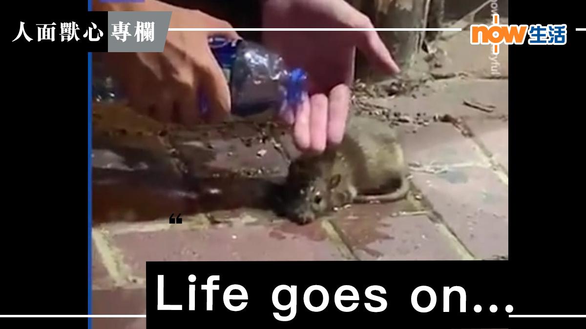 〈人面獸心〉Life goes on -麥志豪
