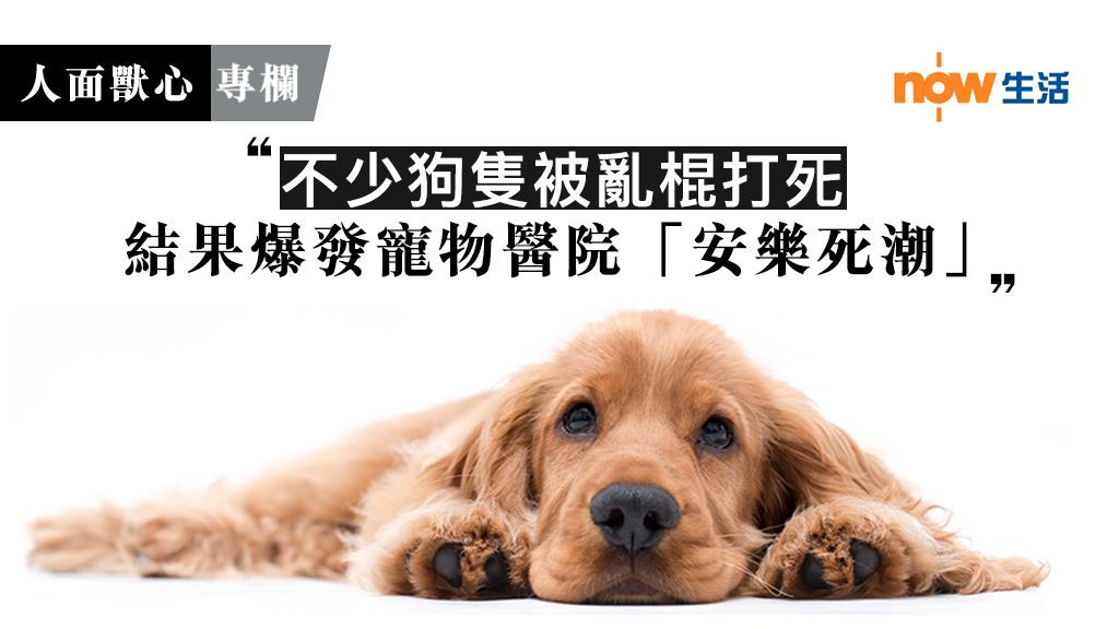 〈人面獸心〉但願中國沒有狗-麥志豪