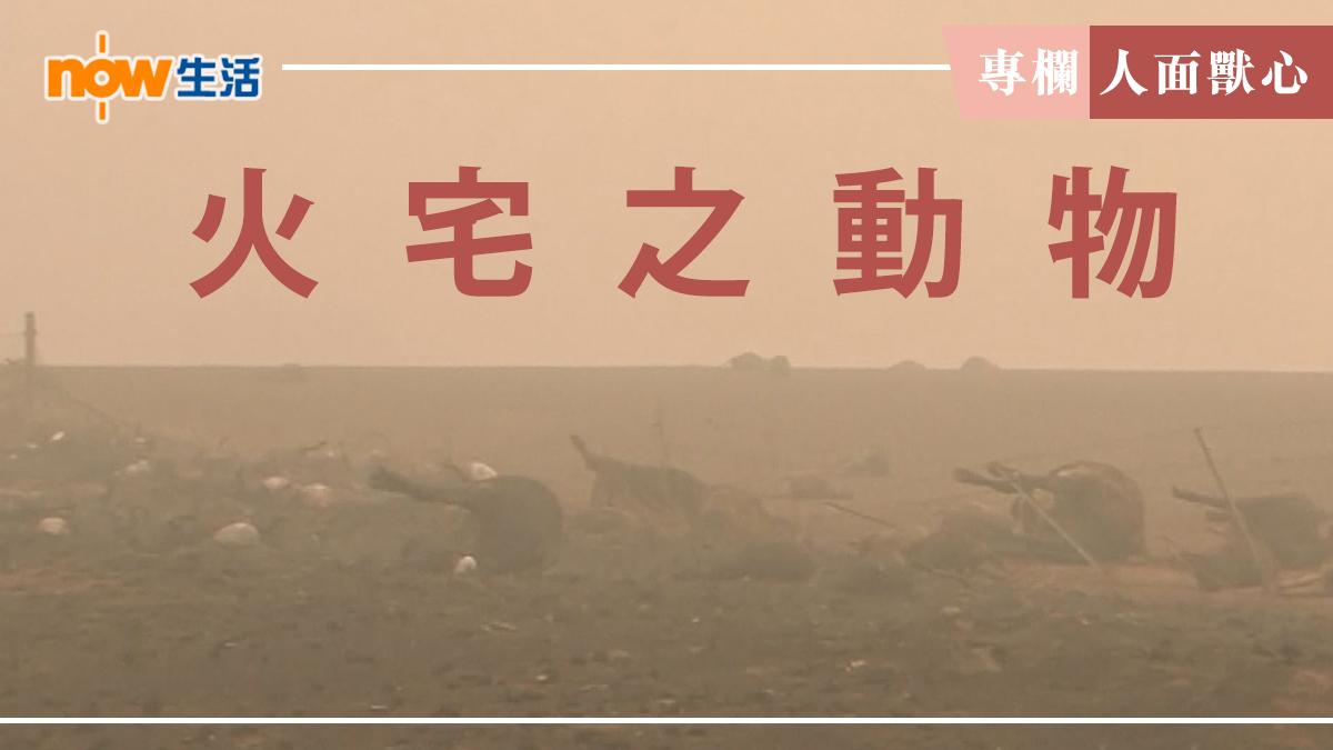 〈人面獸心〉火宅之動物-麥志豪