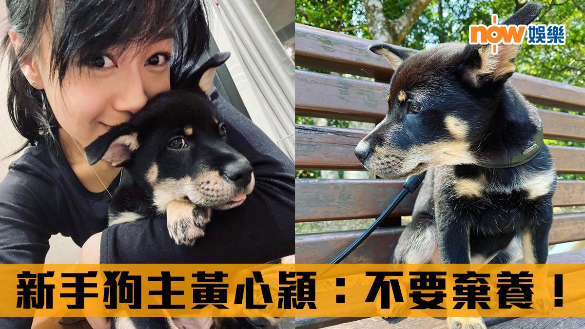 【新型肺炎】有狗隻對病毒呈弱陽性 新手狗主黃心穎:不要棄養!