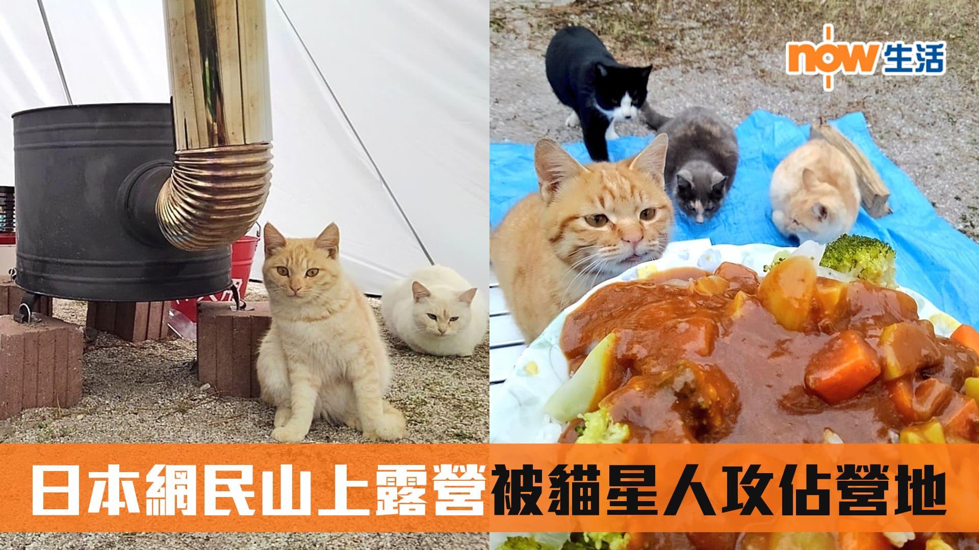 【最可愛山賊】日本網民山上露營被貓星人攻佔營地