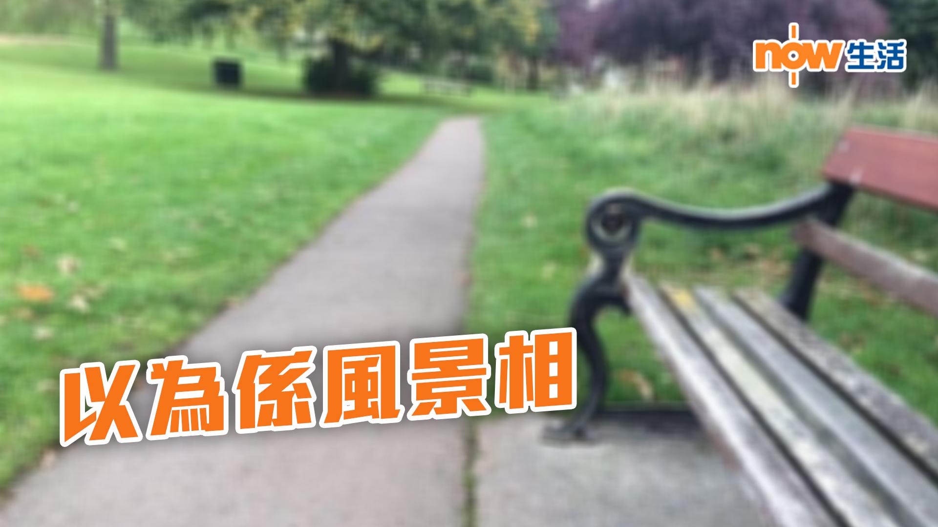 〈好笑〉英主人放狗影相 八哥完美融入無人公園