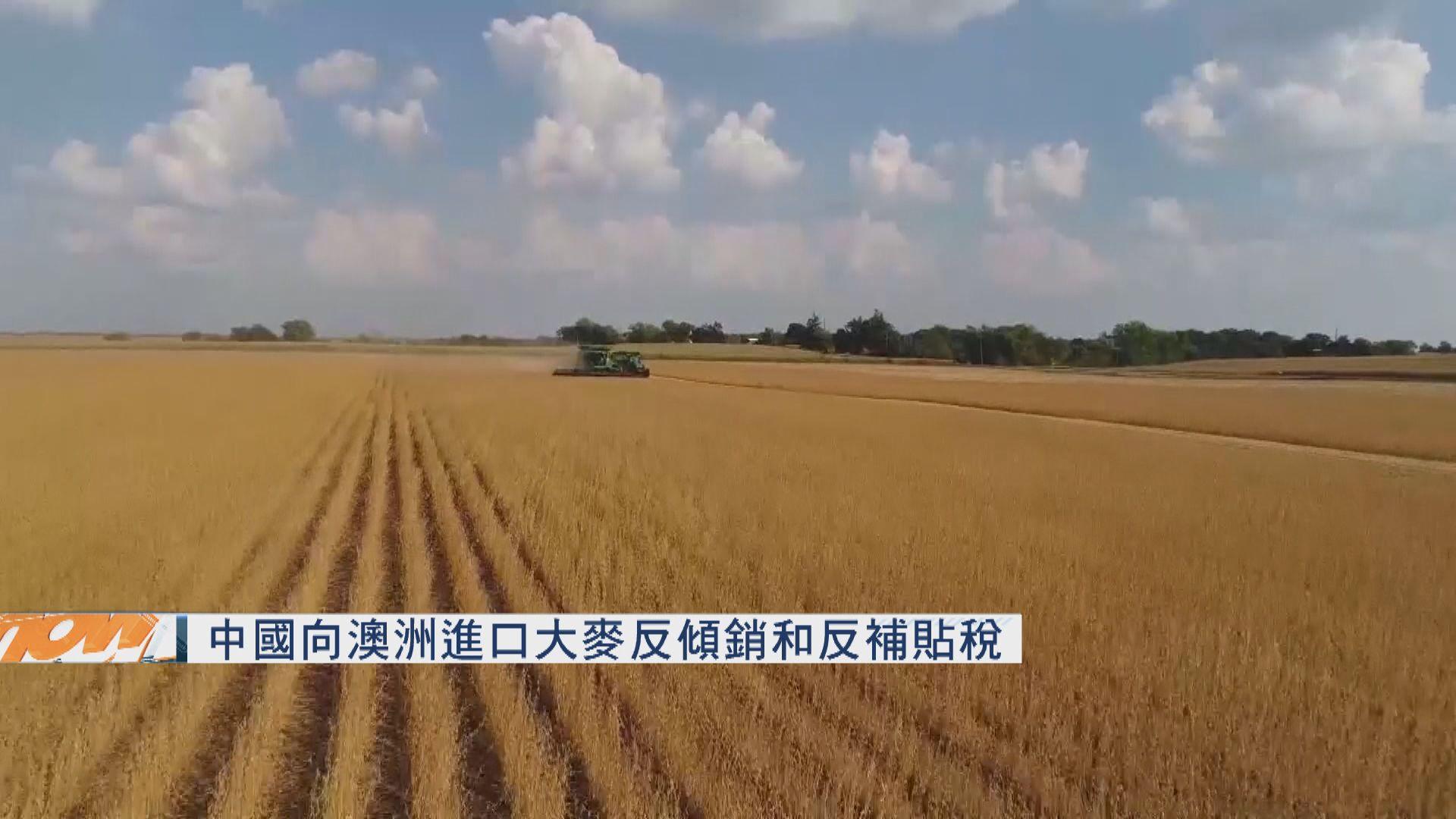 中國向澳洲進口大麥徴反傾銷和反補貼稅