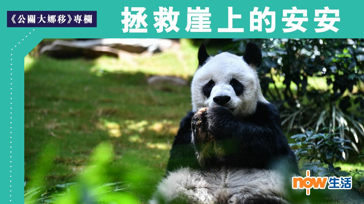 〈公關大娜移〉拯救崖上的安安-陳仕娜