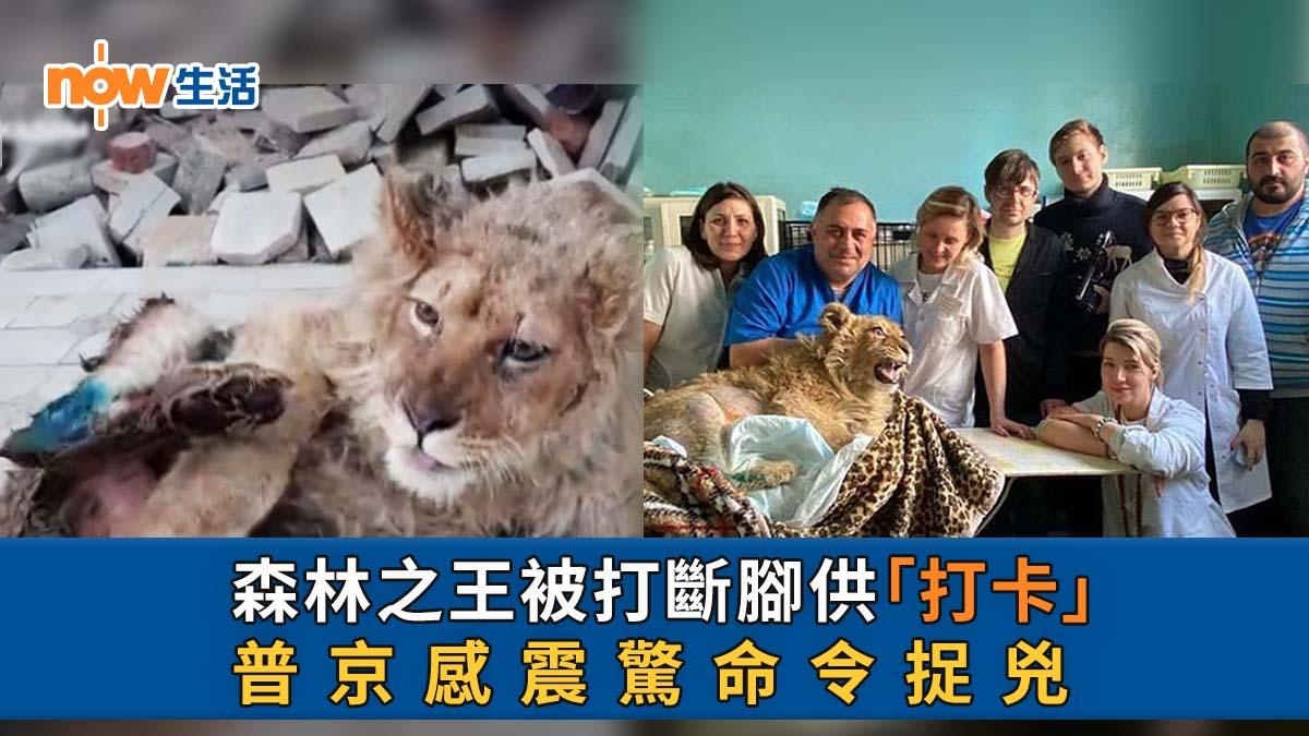 為遊客拍照幼獅被打斷腳  總統普京震驚命徹查