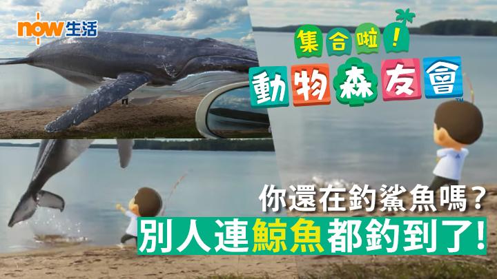 【動森】動森人物現身真實世界?釣到超巨大鯨魚讓路人嚇傻!