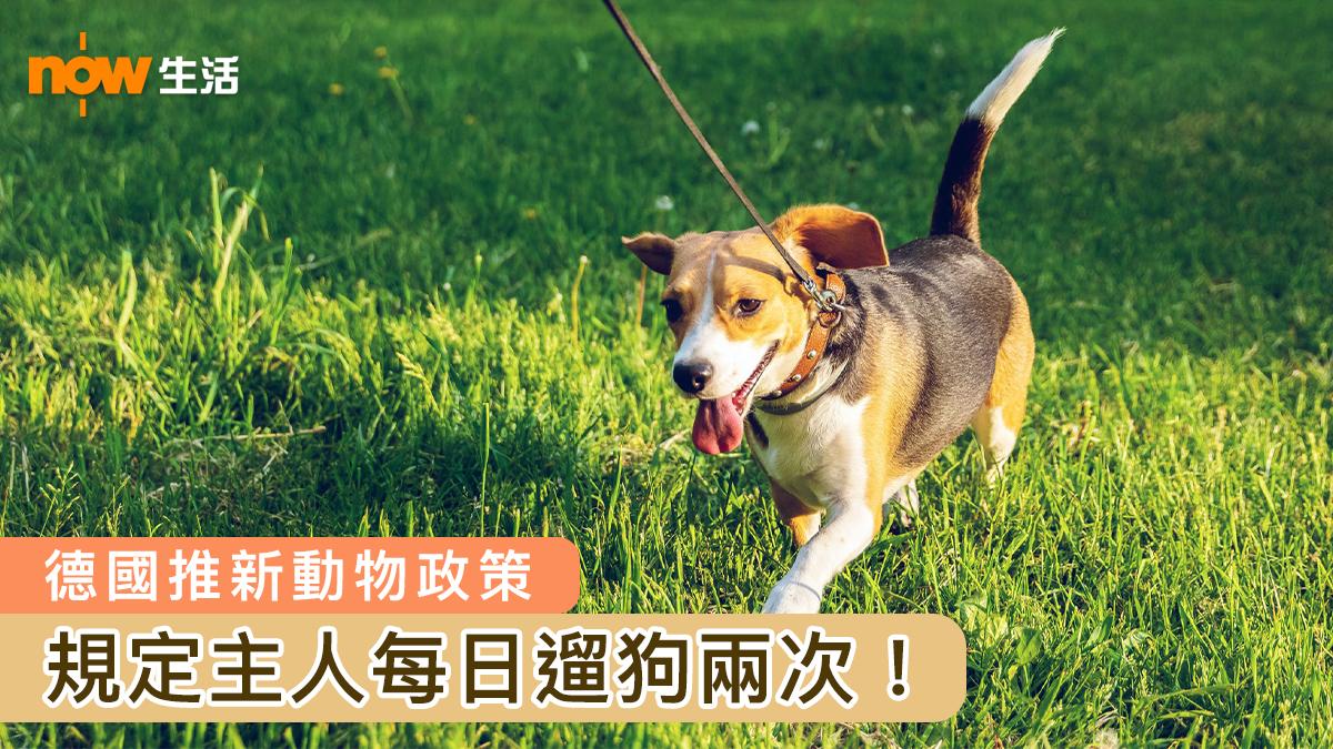 【汪星人喜訊】德國推新動物政策 飼主每日須遛狗兩次