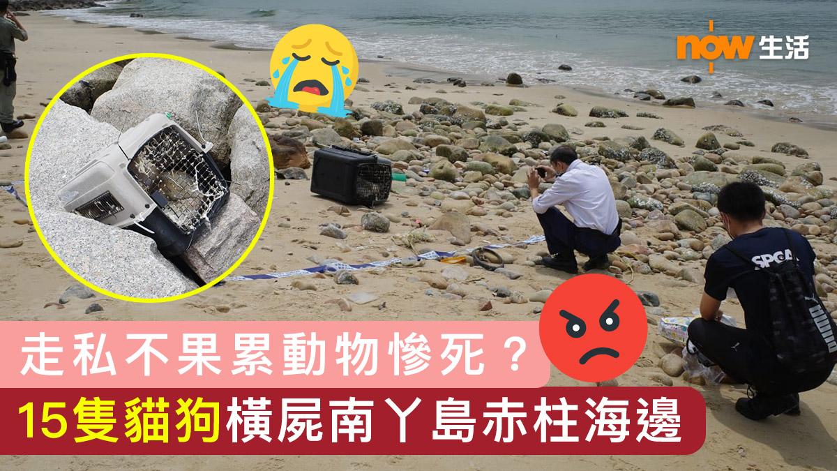 〈好慘〉疑走私返內地不果累動物慘死 15隻貓狗橫屍南丫島赤柱海邊