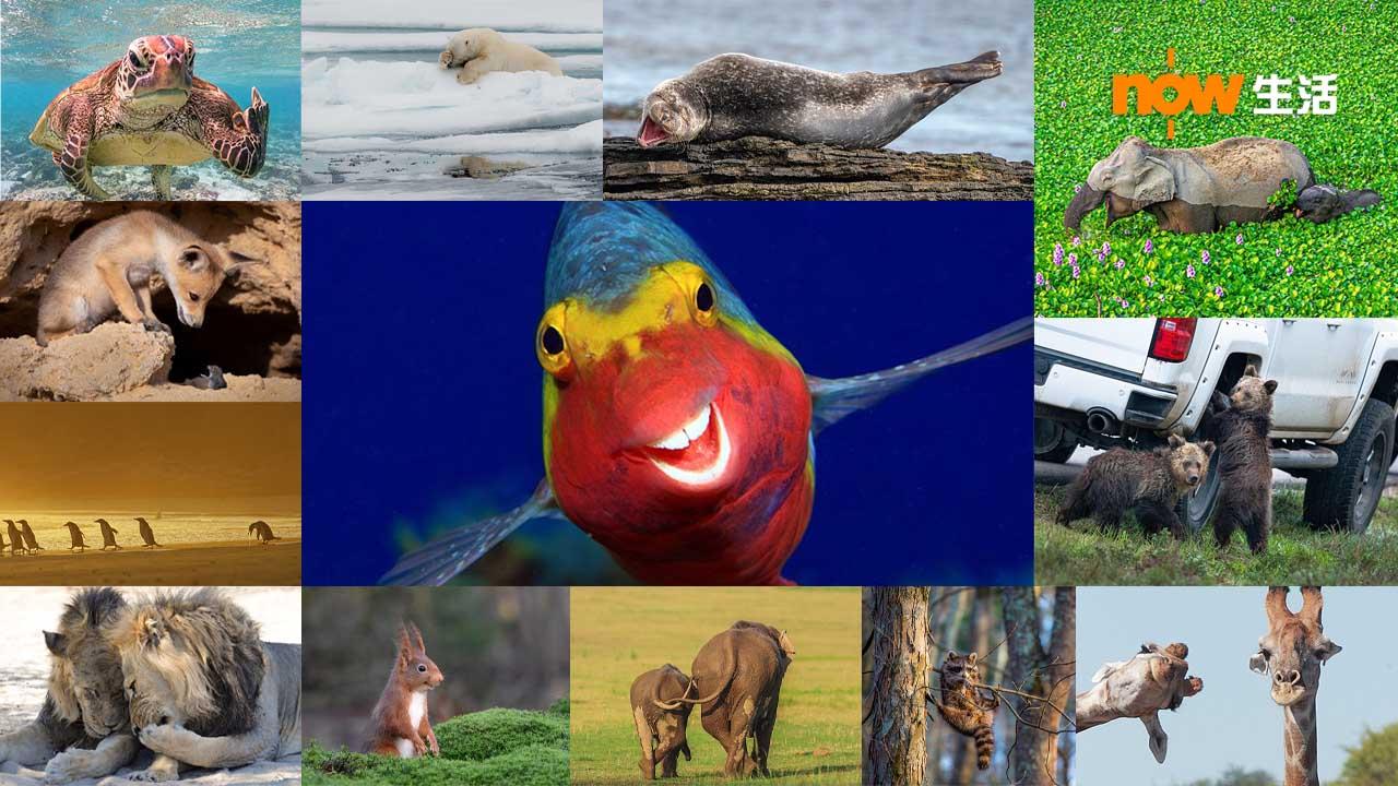 〈好笑〉搞笑野生攝影獎公布入圍作品