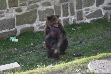 〈好慘〉上海野生動物園飼養員被黑熊分屍 遊客目擊過程:心情久久不能平伏