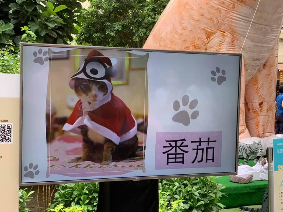 召喚貓奴!愛協舉辦首屆「情尋貓貓節」 Halloween利東街打卡贏禮物