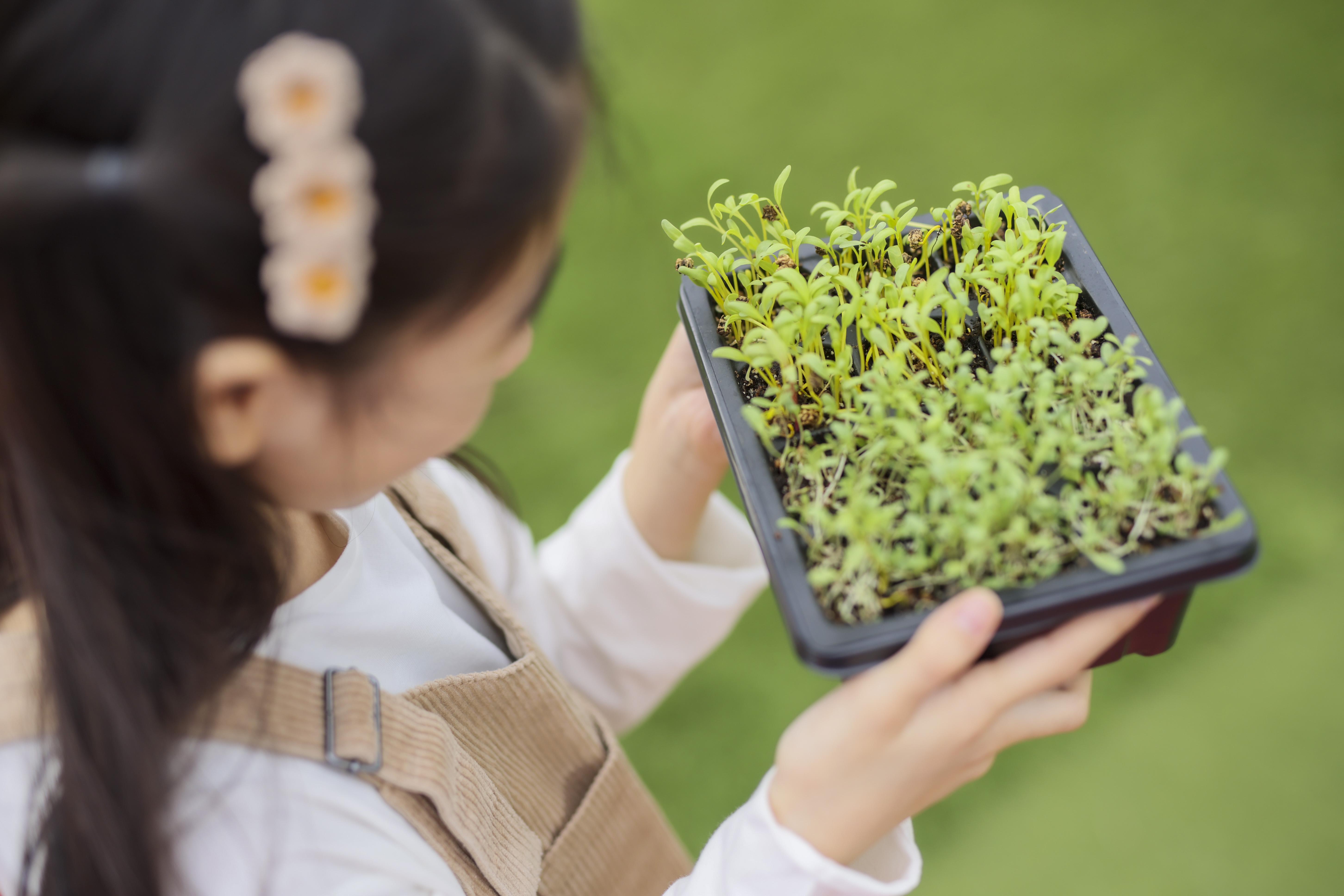 【綠色生活】樂富商場設3000呎戶外都市農莊 免費派過千份香草飲品小食
