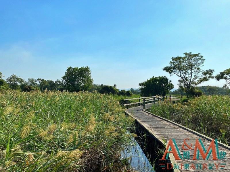 〈好遊〉深度觀鳥本地遊 米埔自然保護區