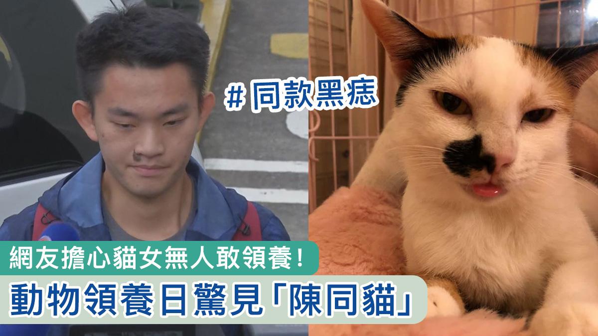 〈好慘〉動物領養日驚見「陳同貓」 網友:唔怕生壞命,最怕改錯名
