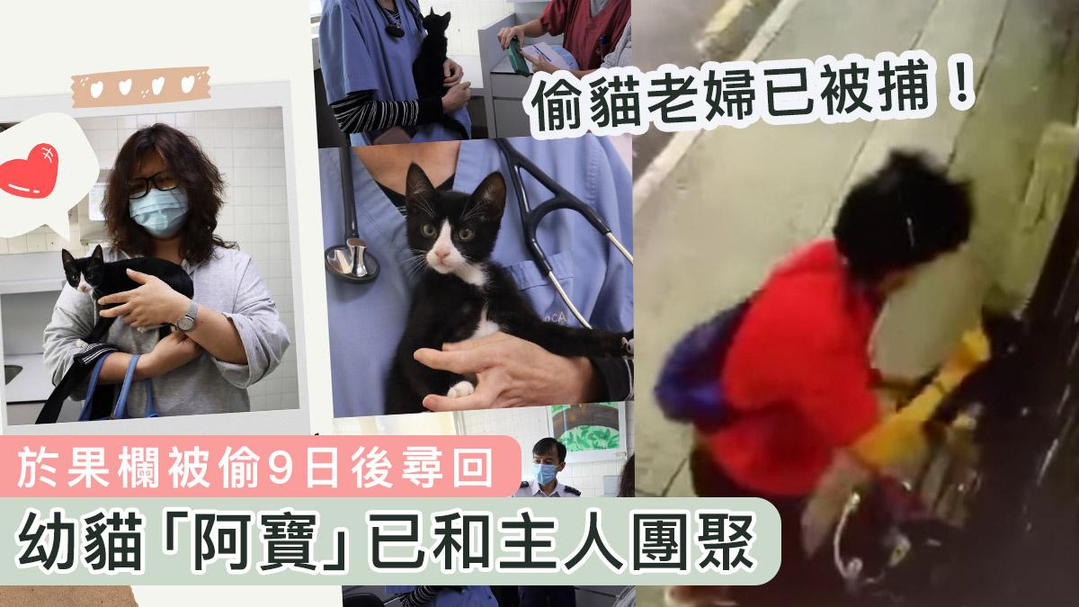 【報平安】果欄貓「阿寶」失蹤9日後尋回 已補打晶片與主人團聚