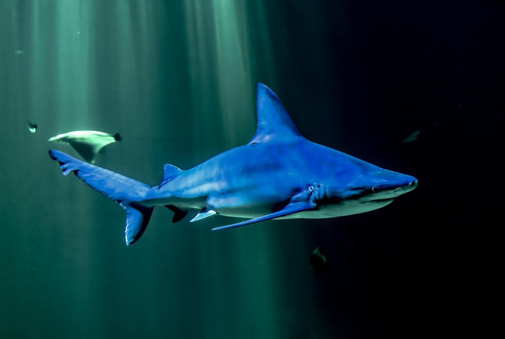 〈好笑〉「鯊魚愛情故事」熱爆網 迷因源頭來自何方?