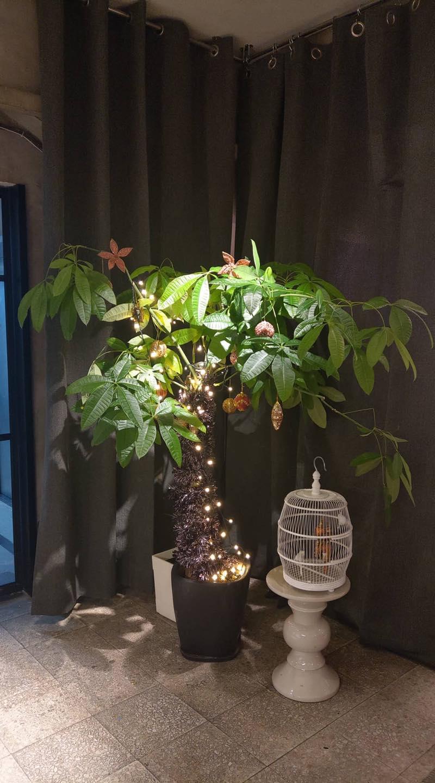 風水樹充聖誕樹