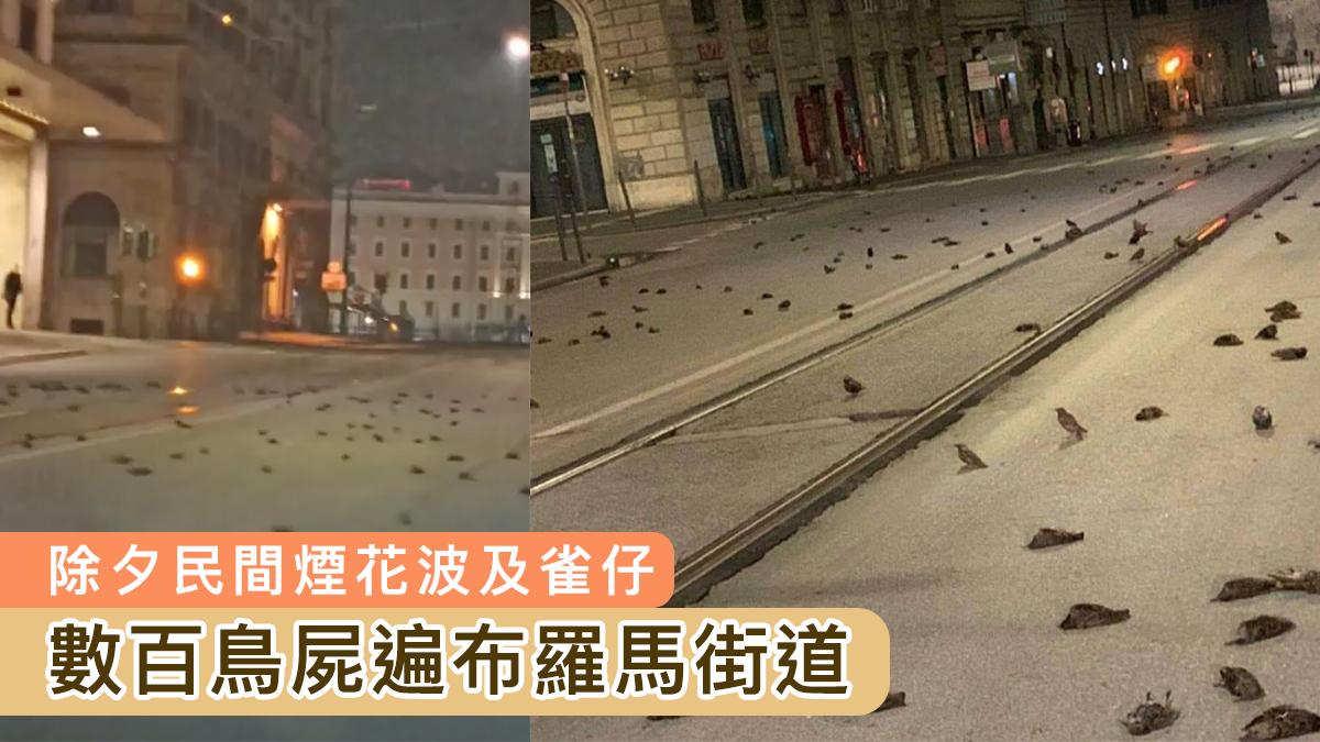 〈好慘〉意大利除夕「民間煙花」波及雀仔 數百鳥屍遍布街道
