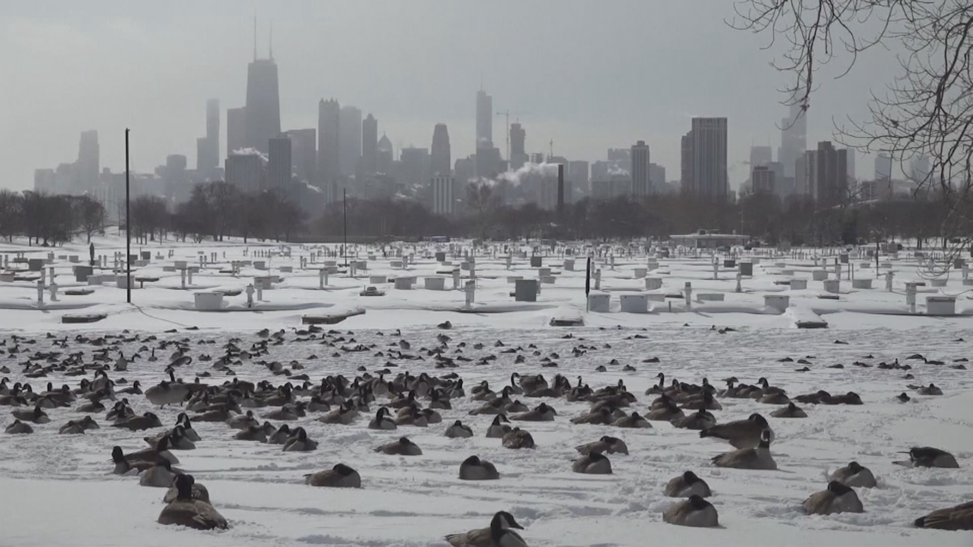 美國受北極寒流侵襲 逾七成土地被雪覆蓋至少21死