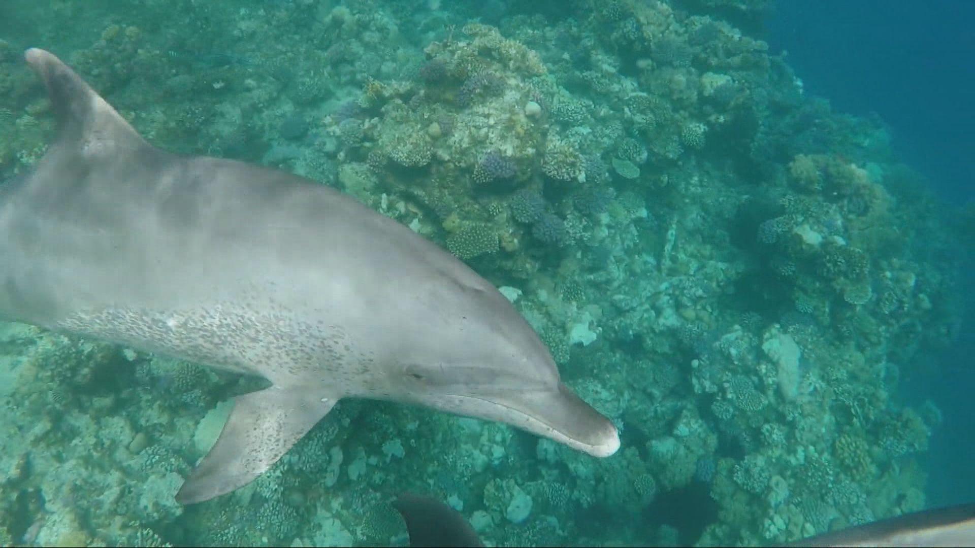 【即日焦點】菲傭完成檢疫後初確帶有變種病毒 將軍澳舒適堡再有個案員工顧客須檢疫;研究發現雄性海豚懂分辨「盟友」