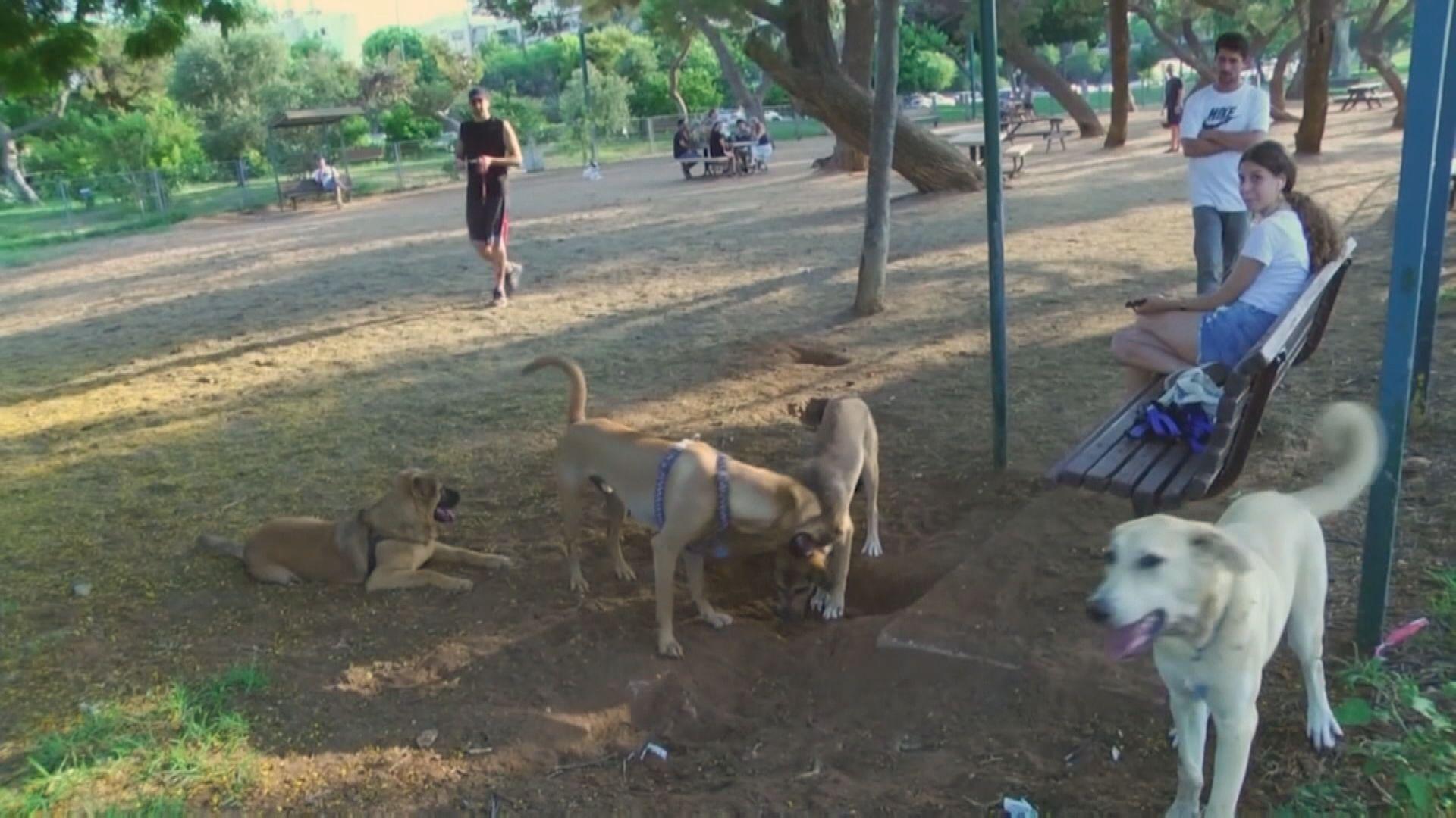 【環球薈報】特拉維夫將驗路邊狗隻糞便DNA 追查狗主身份